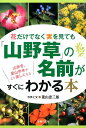 花だけでなく実を見ても「山野草」の名前がすぐにわかる本 [ 菱山忠三郎 ]