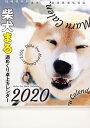 2020年 柴犬まる週めくり卓上カレンダー [ 小野 慎二郎 ]