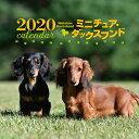 2020年 大判カレンダー ミニチュア・ダックスフンド [ 井川 俊彦 ]