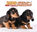 2020年 ミニ判カレンダー ミニチュア・ダックスフンド [ 井川 俊彦 ]