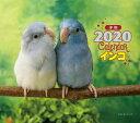 2020年 ミニ判カレンダー インコ [ 大橋 和宏 ]