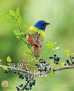 世界で一番美しい鳥図鑑 大空を舞い、 木々に水辺に佇む (ネイチャー・ミュージアム) [ すずき 莉萌 ]