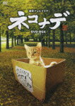 連続テレビドラマ ネコナデ DVD-BOX