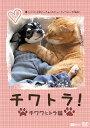 チワトラ!チワワとトラ猫★凛(リン)と正宗にぃちゃんのビューティフォーな毎日!