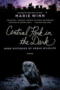 Central_Park_in_the_Dark��_More