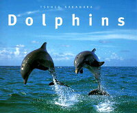 DOLPHINS��P��