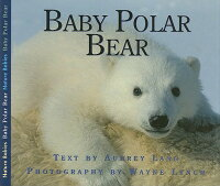 Baby_Polar_Bear