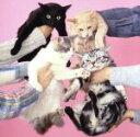 【中古】 猫とアレルギー /きのこ帝国 【中古】afb