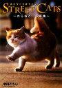【中古】 STREET CATS のらねこ。写真集 /中川こうじ【著】 【中古】afb