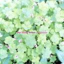 楽天ブックオフオンライン楽天市場店【中古】 Organic /My Little Lover 【中古】afb