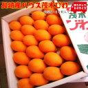 【果物専門店の特選品】長崎産ハウス茂木びわをたっぷり24粒入...