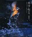 カワセミ ある日、カワセミに出会いました。/福田啓人【2500円以上送料無料】