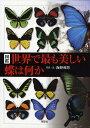 図鑑世界で最も美しい蝶は何か/海野和男【3000円以上送料無料】