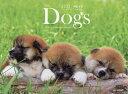 カレンダー '22 Dogs/増田勝正【3000円以上送料無料】