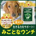 【メール送料無料】犬 猫 乳酸菌 サプリ プラチナ...