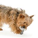 噛む力がとても強いワンちゃんにおススメ Planet Dog プラネット・ドッグ オービータフ・ダブルタフ ダイヤモンド スチール Lサイズ 【犬/おもちゃ/ゴム/頑丈/噛む】