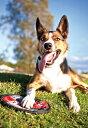 水に浮いて壊れにくい軽くて丈夫な犬用 フリスビー EZY DOG イージードッグ フィドフライヤー 【犬 おもちゃ ペット ナイロン フライヤー 防水】