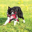 コンパクトに4つに折り畳めるフリスビー EZY DOG イージードッグ ドッグスター フライヤー 【犬/おもちゃ/フリスビー/防水/ペット】