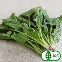 [有機JAS]ほうれん草(150g) 無化学農薬/無化学肥料/有機栽培/国産/西日本/オーガニック【