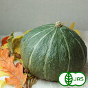 [有機栽培] かぼちゃ(1玉)