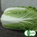 [有機栽培] ミニ白菜