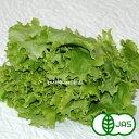 [有機栽培] グリーンリーフレタス