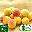 [有機栽培] 熊代農園の完熟梅 (5kg)【おいしくて安全な野菜宅配のお店_有機栽培_ _完熟梅_5kg_おいしい人参のぶどうの木】