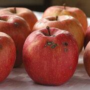 [有機栽培] ジュース用りんご (約4kg)