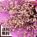 大きな桜花束「2020陽春の宴」