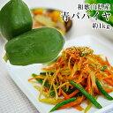 和歌山県産 青パパイヤ 約1kg(1玉)パパイン酵素たっぷり!ソムタムやサラダ、きんぴら、野菜炒め、