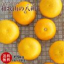 和歌山の八朔(ハッサク)約5kg減農薬・有機肥料栽培【送料無料】L~2Lサイズ 約5kg(16~18玉)上品な甘み、程よい酸味、独特の苦みが美味しい昔ながらのはっさくです。