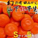 幻の有田みかん『山下紅早生』Sサイズ5kg入【送料無料】甘みが強く濃厚で程よい酸味。鮮やかな紅色と中袋の薄さ、糖度以上の甘みが特徴
