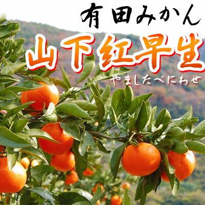 幻の有田みかん 山下紅早生(徳常 誠道さん)5kg~