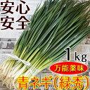 こだわり青ネギ(緑秀)1kg(送料無料)万能薬味ねぎ!和歌山県産の山頂で自然の恵みを存分に浴びて育つ
