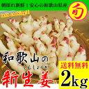 2017ご予約開始!新生姜(和歌山県産)約2kg入 送料無料】砂地のハウスで低農薬栽培される大変瑞々しく、香り高く爽やかな辛味が特徴の新しょうがです!