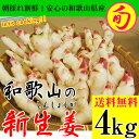 2018ご予約開始!新生姜(和歌山県産)たっぷりお得な約4kg入【送料無料】<朝採れ新