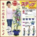 【お取寄】 あさがお栽培 ステップアップあさがおセット DXセット 朝顔 日本製 夏休み 自由研究
