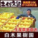 【訳あり文旦】土佐文旦家庭用Mサイズ10キロ箱【ぶんたん・ブンタン】【生産農家直売】