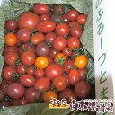 麻岡まるさんちの約40品種のミニトマトの中から20品種以上の詰め合わせミックスセット