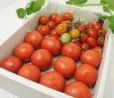 麻岡まるさんちのフルーツトマトとミニトマト詰め合わせ3点セット