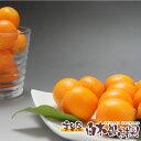 高知産フルーツきんかん15パックセット