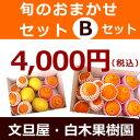 白木果樹園旬の柑橘おまかせセット【Bセット】フルーツ果物 詰...