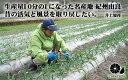 「由良町」檜屋 天狗しょうゆ(煮炊用) 1800ml 醤油 しょうゆ ギフト