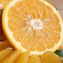 【送料無料】紀州有田産の春みかん わけあり柑橘完熟田の浦オレンジ(新甘夏・サンフルーツ)(買得品4.5kg)ご家庭用