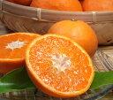 紀州有田みかんの里から・なつみ(南津海)みかん(わけあり柑橘:買得品5kg)ご家庭用 ・この果実は種があります