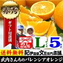 武内さんちのバレンシアオレンジギフト用【秀】選別 Lサイズ5kg【送料無料】有田郡吉
