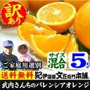 武内さんちのバレンシアオレンジご家庭用【送料無料】サイズ混合5kg有田郡吉備町奥(お