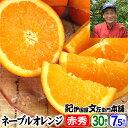 西崎さんちのネーブルオレンジ【送料無料】【秀品】特選ギフト選別品<30果入 約7.5kg