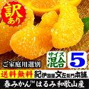 はるみ(柑橘)