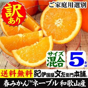 ネーブル オレンジ かんきつ ワケアリ